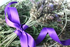 Fresh Lavender. A bunch of fresh lavender tied with satin ribbon on pile of lavender Royalty Free Stock Photos