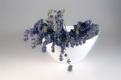 Fresh lavender. Bowl with freshly-picked lavender blossoms royalty free stock photography