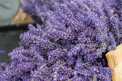 Fresh lavender in a basket. Bunches of fresh lavender in a basket Stock Photos