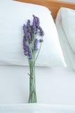 Lavender on pillow Stock Photos