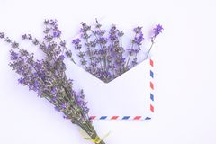 Fresh lavender bouquet and blank airmail envelope isolated on white background. Romantic message concept with copy space. Fresh lavender bouquet and blank royalty free stock images
