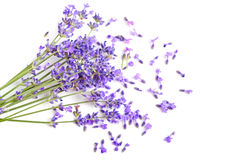 Fresh lavender. Bunch of fresh lavender flowers on a white background Royalty Free Stock Image