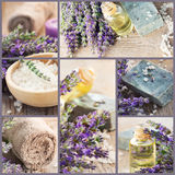 Fresh lavender collage stock photography