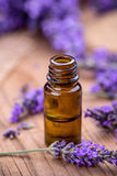 Fresh lavender flower Stock Photography