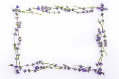 Fresh lavender flowers and blueberries arranged in circle on a white background. Lavender flowers and blueberries mock up. Royalty Free Stock Images