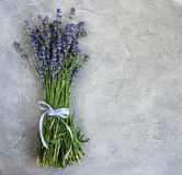 Fresh lavender flowers. On a concrete background royalty free stock photography