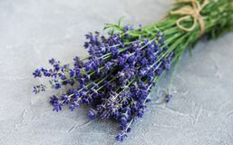 Fresh lavender flowers. On a concrete background royalty free stock images