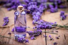 Fresh lavender flowers Stock Image