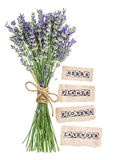 Fresh lavender flowers with paper tags isolated on white Royalty Free Stock Photography