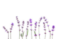 Fresh lavender flowers on a white background. Lavender flowers mock up. Copy space. Stock Photography