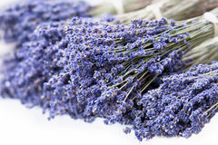Fresh lavender handmade bunches on white Royalty Free Stock Photography
