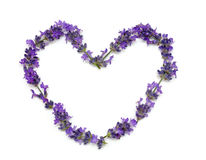 Fresh lavender heart Royalty Free Stock Photography