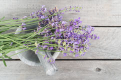 Fresh lavender herbs in marble mortar Royalty Free Stock Photography