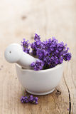 Fresh lavender in mortar Stock Image