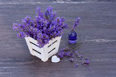 Fresh lavender in white basket, lavender essential oil and heart on grey wooden background. Royalty Free Stock Image