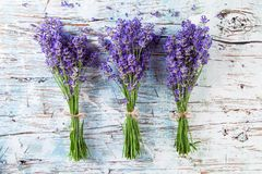 Fresh lavender on wood Royalty Free Stock Images