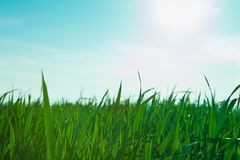 Fresh lawn in the morning Stock Photos