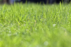 The fresh lawn in the morning Stock Image