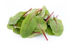 Fresh leaf beet root isolated on white background Stock Image