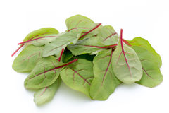 Fresh leaf beet root isolated on white background. Royalty Free Stock Photos