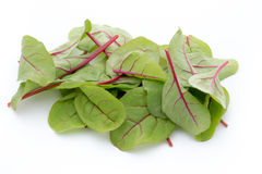 Fresh leaf beet root isolated on white background Stock Photography