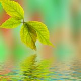 Fresh leaf, blue sky and shine water surface Royalty Free Stock Image