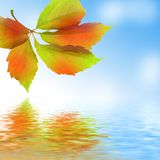 Fresh leaf, blue sky and shine water surface Stock Images