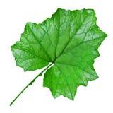 Fresh leaf cutout Stock Photos