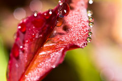 Fresh leaf with dew drops Stock Photo