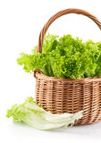 Fresh leaf lettuce in wicker basket Stock Images