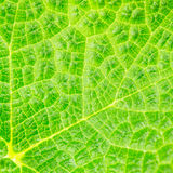 Fresh leaf macro background Stock Photo