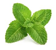 Fresh leaf mint green herbs ingredient royalty free stock images