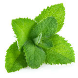Fresh leaf mint green herbs ingredient Stock Images