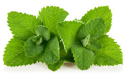 Fresh leaf mint Royalty Free Stock Photos