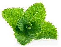 Fresh leaf mint. On white background Royalty Free Stock Image