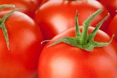 fresh leaf mushroom parsley tomato στοκ φωτογραφία με δικαίωμα ελεύθερης χρήσης
