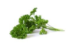 Fresh leaf of parsley Royalty Free Stock Image