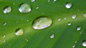 Fresh leaf with rain drops image for wallpaper, background, card or banner template. Royalty Free Stock Photo