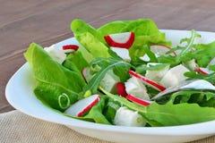 Fresh leaf vegetable salad with feta cheese closeup Stock Photos