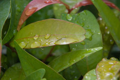 Fresh leaf with water droplets Stock Photos