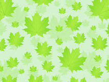 Fresh leafs background Stock Photography