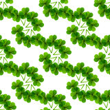 Fresh leafs clover seamless pattern Stock Photography