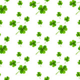 Fresh leafs clover seamless pattern Royalty Free Stock Image