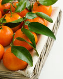 Fresh leafy clementines Royalty Free Stock Photography