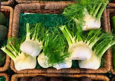 Fresh Fennel in Shop. Fresh leafy fennel, for sale in fresh fruit and vegetable shop royalty free stock image
