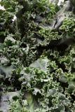 Fresh leafy kale Stock Photos