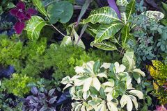 Fresh leafy photo background. Tropical foliage plant in exotic garden. Stock Photo
