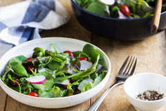 Fresh leafy salad Royalty Free Stock Photography