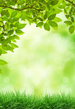 Fresh Leaves. Ahead leaves in the foreground, along with spacious blurs in the background Royalty Free Stock Images