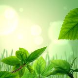 Fresh leaves, background Stock Images